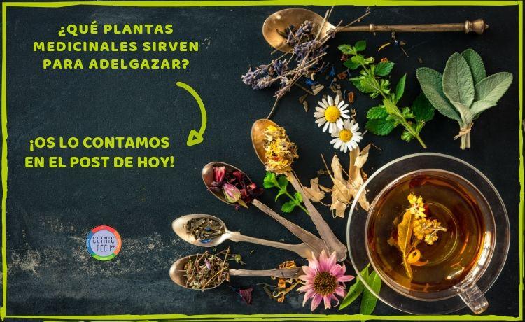 Plantas medicinales para adelgazar, Clinictech