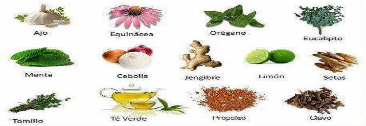 Los alimentos y plantas que contienen antibióticos naturales