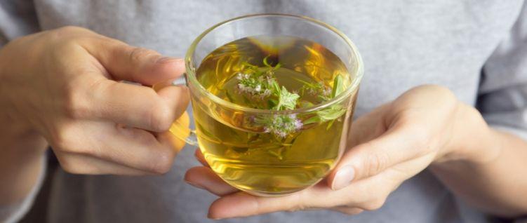 Te contamos cuales son las plantas medicinales para adelgazar